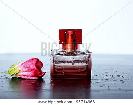 Female Perfume With A Pink Tender Flower And Drops Of Water