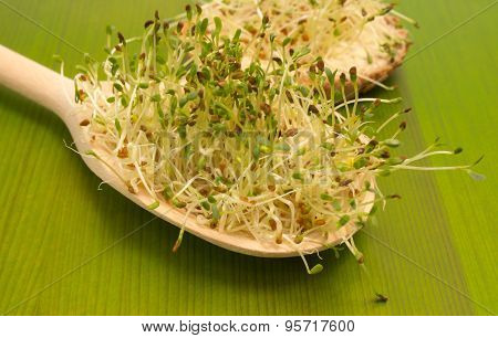 Fresh Alfalfa Sprouts On A Green Board