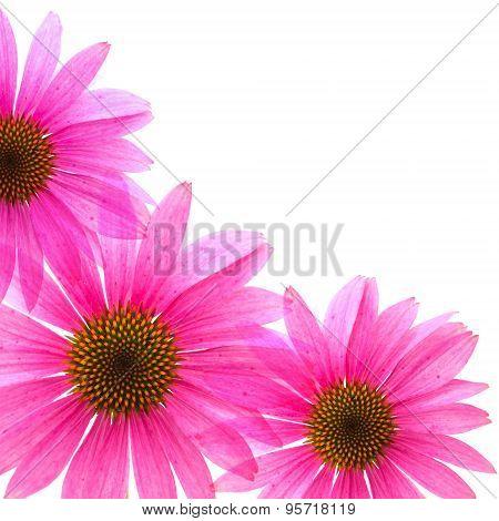 Floral Corner Piece
