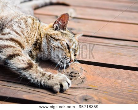 Lazy tabby cat lying on a wood, bright colours