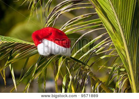 Red Santa's Hat Hanging On Palm Tree At The Tropical Beach
