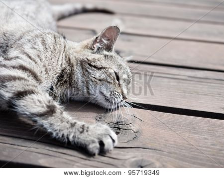 Lazy tabby cat lying on a wood, soft colours
