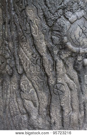 the texture of the stone tree