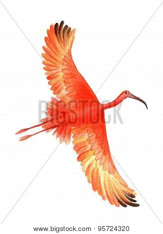 bird  illustration