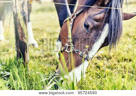 Closeup Of Horse Eating Grass