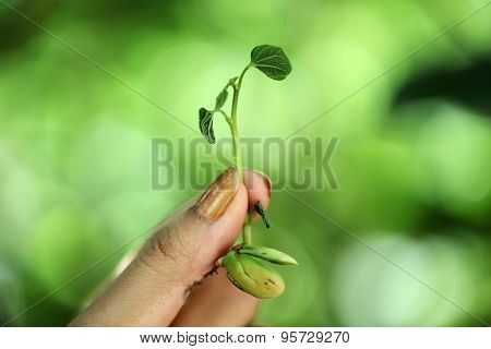 Hand Holding Small Plant