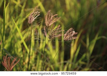 Summer Grass Flowers