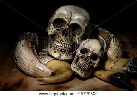 close up human skull still life background