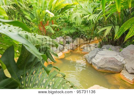 Arenal hot spring, Costa Rica