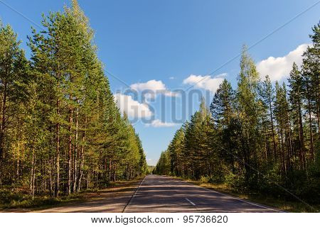 Empty Road In The Woods