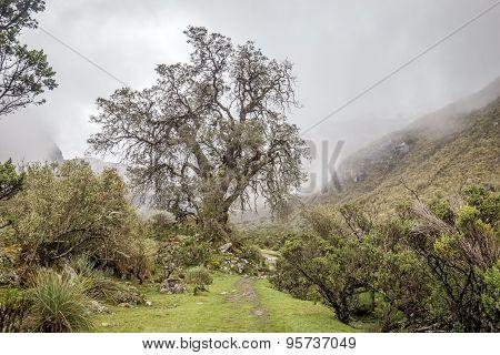 Landscape of Santa Cruz Trek, Cordillera Blanca, Peru South America