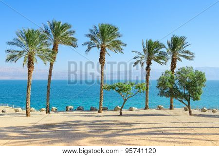 Scenery Of Dead Sea With Palm Trees On Sunshine Coast