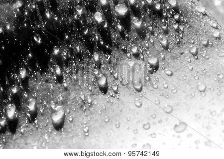 Rain drops on a marble in black and white