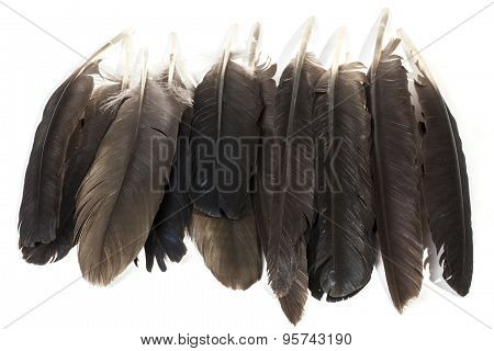 Collection Of Birds Feathers In Varying Shades Of Grey