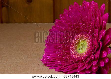 Pink Gerbera On Brown Background