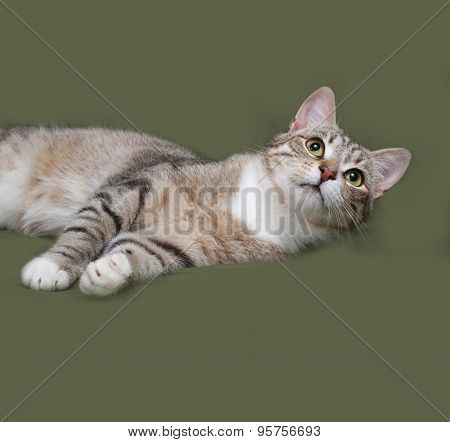 Tabby And White Cat Lies On Green