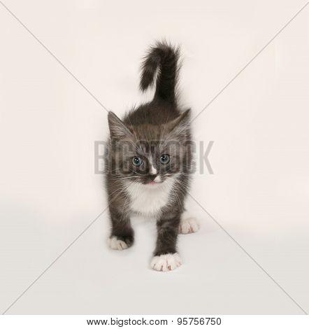 Siberian Fluffy Tabby Kitten Standing  On Gray