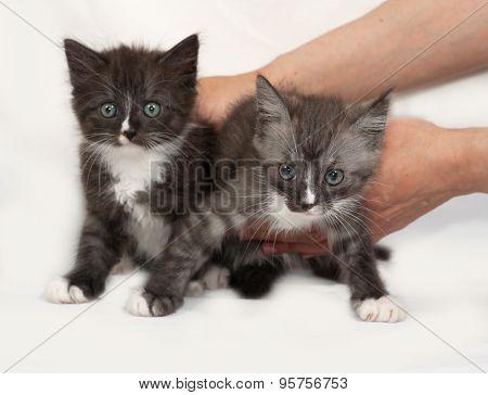 Two Siberian Fluffy Tabby Kitten Standing  On Gray