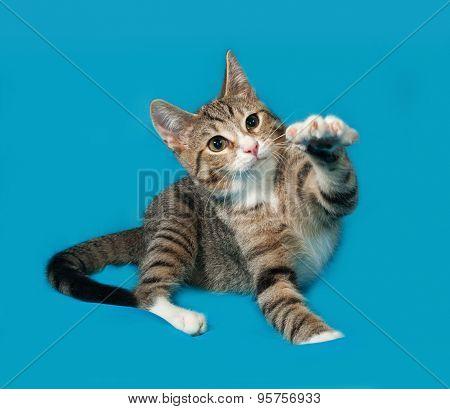 Tabby Kitten Playing On Blue