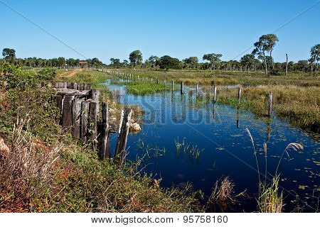 Swamp of Pantanal