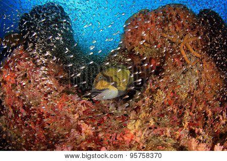 Fish and triggerfish underwater