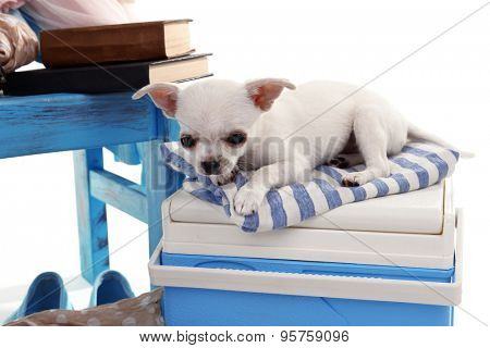Adorable chihuahua dog and heap of different things close up