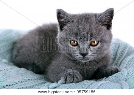 Cute gray kitten on warm plaid, closeup