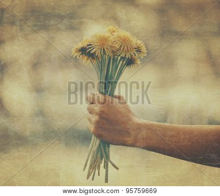 Female Hand With Bouquet Of Dandelions
