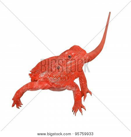 Bearded Dragon Or Pogona Vitticeps On White Background