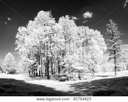 An infrared image of some nice trees