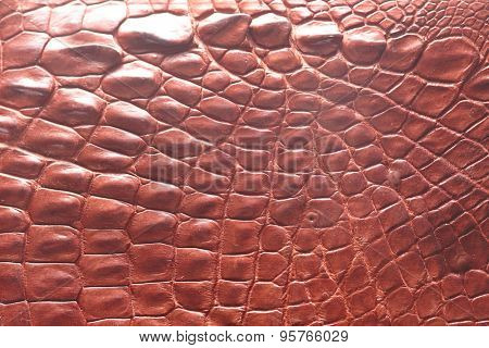 Alligator patterned background