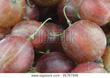 gooseberries (Ribes uva-crispa) background