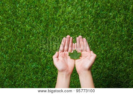 Human hands holding tree leaf