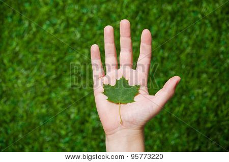Human hand holding tree leaf close up