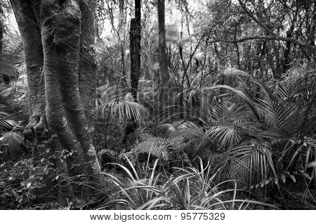 Tree and ferns in tropical jungle