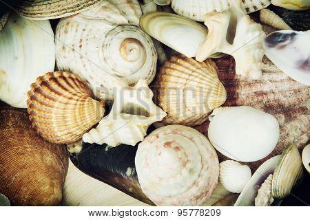 Background Of Various Sea Shells