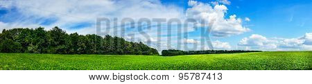 Beautiful Cultivated Soy Field In The Summer.