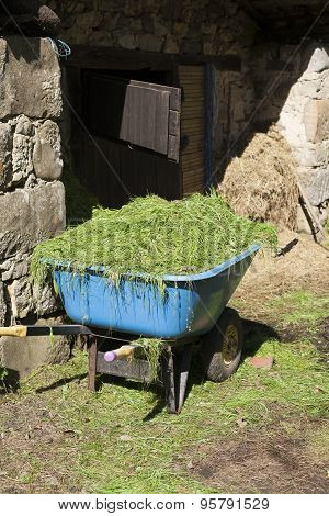 Wheelbarrow With Grass