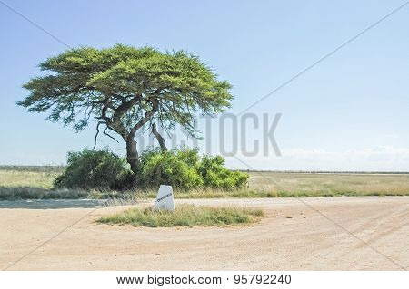 Camelthorn Tree At The Charitsaub Waterhole