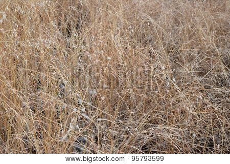 Nature abstract background , Brown clump of Dry Grass