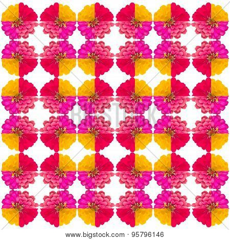 Zinnias Flower Seamless Pattern Isolated On Background