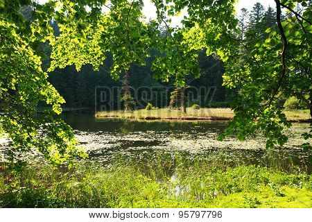 View Through The Green Branches Of The Forest On Island In Middle Of The Lake