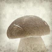 picture of boletus edulis  - textured old paper background with porcino mushroom Boletus edulis - JPG