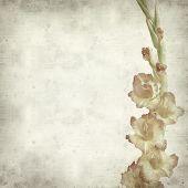 pic of gladiolus  - textured old paper background with orange gladiolus - JPG