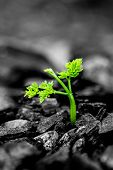 stock photo of ashes  - close up green plant growing from the ashes - JPG