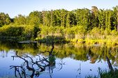 pic of wetland  - Wetlands terrain during sunset  - JPG