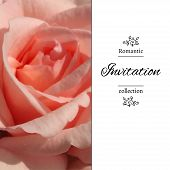 picture of romantic  - Invitation card with a pale pink rose - JPG