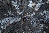 image of scabs  - Beautiful tree bark - JPG