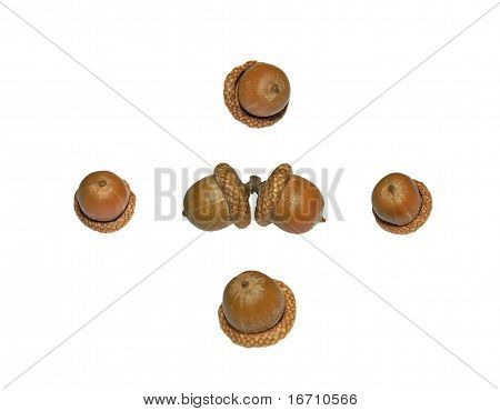 Six acorns of oak isolated on white background