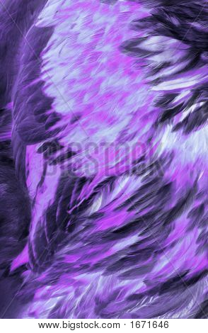 Abstract Lilac Feathers